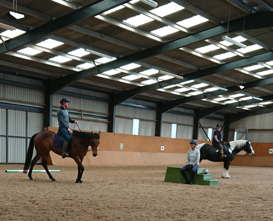 How do I get my horse to slow down, relax and lower its head?